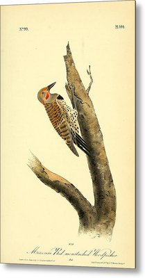 A Red Moustached Woodpecker Metal Print by Philip Ralley