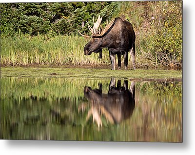 A Reflective Mood Metal Print by Jack Bell