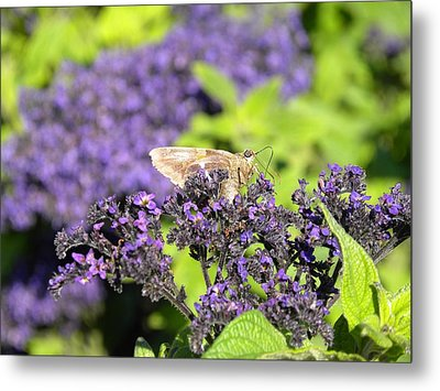 Metal Print featuring the photograph A Resting Traveler by Teresa Schomig