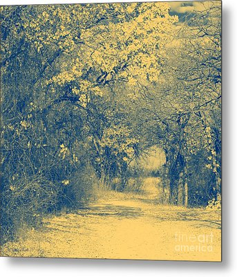 A Road Framed With Trees Metal Print by Mickey Harkins