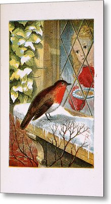 A Robin Metal Print by British Library