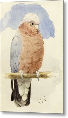 A Rose Breasted Cockatoo Metal Print by Henry Stacey Marks