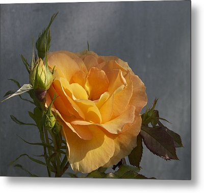 A Rose By Any Other Name Metal Print