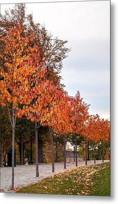 A Row Of Autumn Trees Metal Print