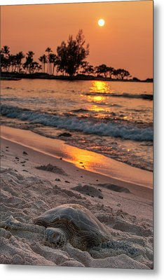 A Sea Turtle Rests On The Beach Metal Print by Carl Johnson