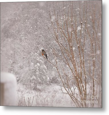 Metal Print featuring the photograph A Sign Of Spring by Brenda Bostic