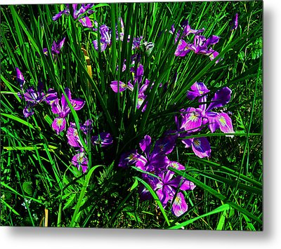A Sign Of Spring Metal Print by Steve Battle