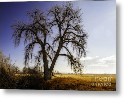 A Simple Tree Metal Print