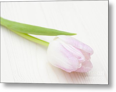 A Single Bloom Metal Print