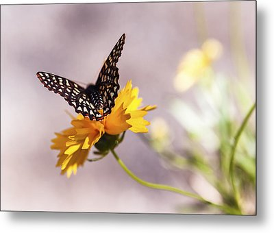 A Sip Of Coreopsis Metal Print by Caitlyn  Grasso