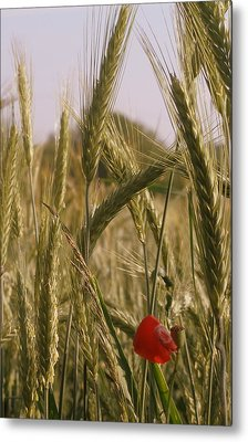 A Small Field In Flanders Metal Print by Michael Canning