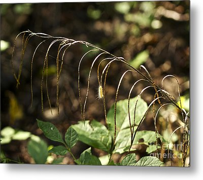 A Speck In God's Eye Yet Precious In His Sight Metal Print by Mother Nature