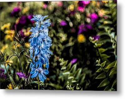 Metal Print featuring the photograph A Splash Of Blue by Joshua Minso