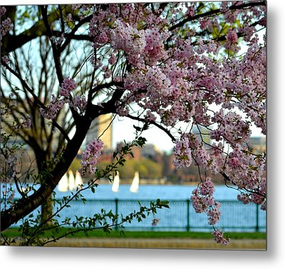 A Spring Day On The Charles River Metal Print by Toby McGuire