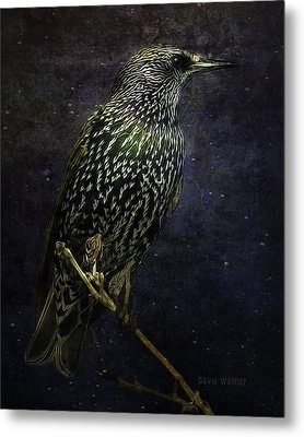 A Starling In Starlight Metal Print by David Wagner