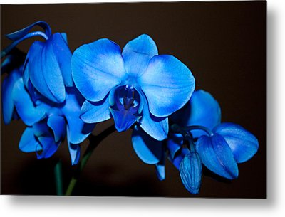 A Stem Of Beautiful Blue Orchids Metal Print by Sherry Hallemeier