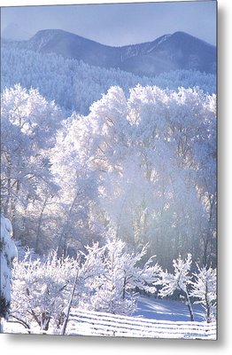 A Study In Frosty Hues Of Winter Whites And Blues Metal Print by Anastasia Savage Ealy