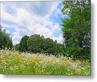 Metal Print featuring the photograph A Summer Meadow by Jim Whalen