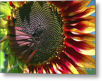 A Sunflower For The Birds Metal Print by Sharon Talson
