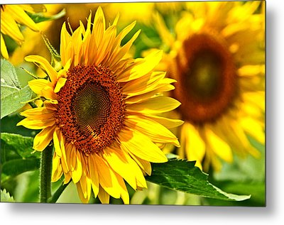 A Sunny Day Metal Print by Mike Martin