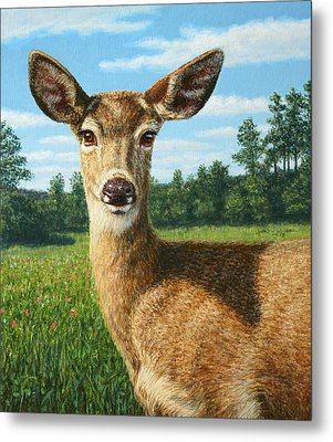 A Sunny Doe Metal Print by James W Johnson