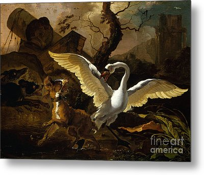 A Swan Enraged By Hondius Metal Print