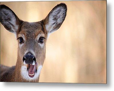 A Talking Deer Metal Print by Karol Livote