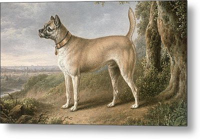 A Terrier On A Path In A Wooded Landscape Metal Print by Charles Towne