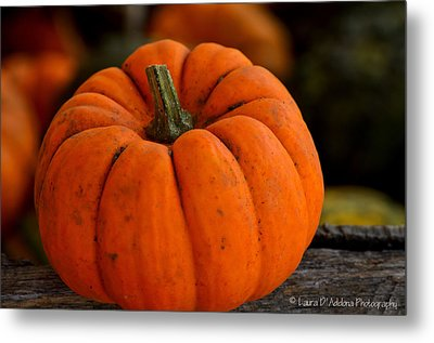 A Thanksgiving Pumpkin Metal Print