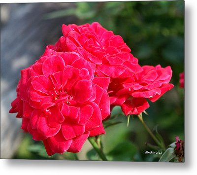 A Thorny Rose Metal Print by Dick Botkin