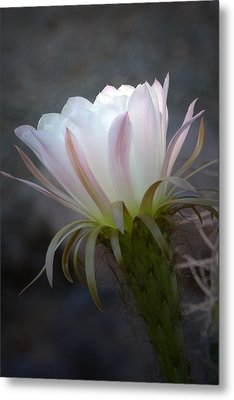 Metal Print featuring the photograph A Touch Of Sun by Cindy McDaniel