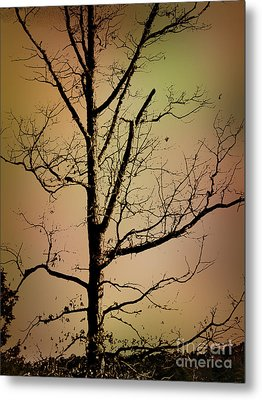 A Tree By The Lake Metal Print