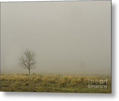 A Tree In Sunrise Fog Metal Print by Cindy Bryant