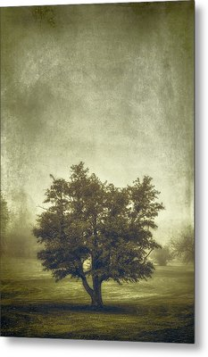 A Tree In The Fog 2 Metal Print by Scott Norris