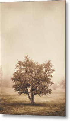 A Tree In The Fog Metal Print by Scott Norris