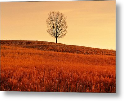 A Tree Is An Object Of Beauty Vii Metal Print by Bijan Pirnia