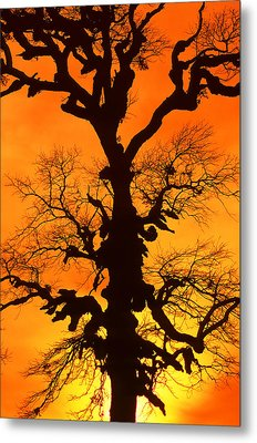 A Tree Is An Object Of Beauty Xii Metal Print by Bijan Pirnia