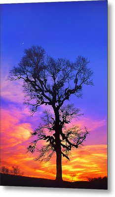 A Tree Is An Object Of Beauty Xiv Metal Print by Bijan Pirnia