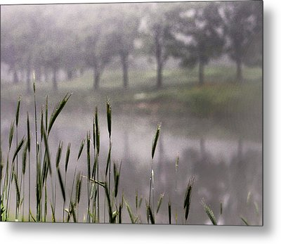 A View In The Mist Metal Print by Bruce Patrick Smith