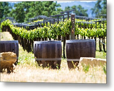 A Vineyard With Oak Barrels Metal Print by Susan Schmitz