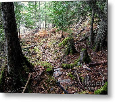 A Walk In The Forest Metal Print by Leone Lund