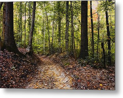 Metal Print featuring the photograph A Walk In The Park by Robert Culver