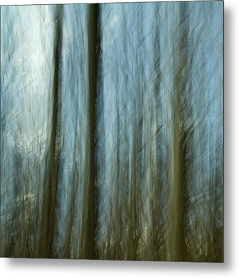 A Walk In The Woods IIi Metal Print by Bob Retnauer