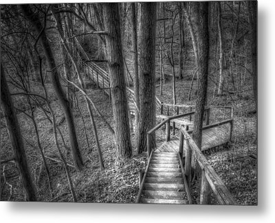 A Walk Through The Woods Metal Print by Scott Norris