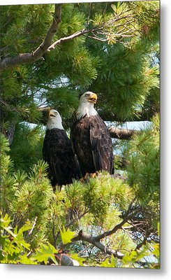 A Watchful Pair Metal Print by Brenda Jacobs