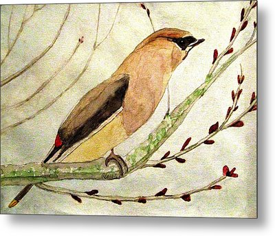 A Waxwing In The Orchard Metal Print by Angela Davies