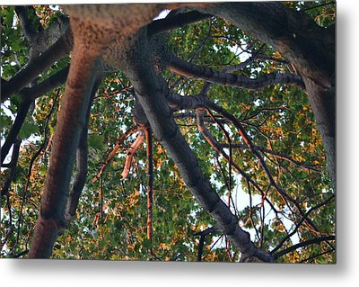 A Web Of Branches Metal Print by Kiros Berhane