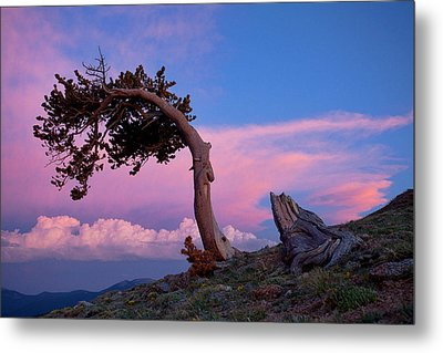 A Westerly Wind Metal Print by Jim Garrison