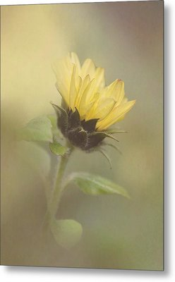 A Whisper Of A Sunflower Metal Print by Angie Vogel