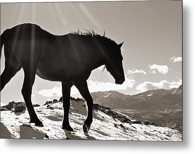 A Wild Horse In The Mountains Metal Print